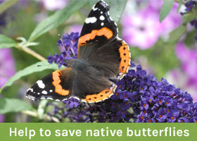 Help to save native butterflies