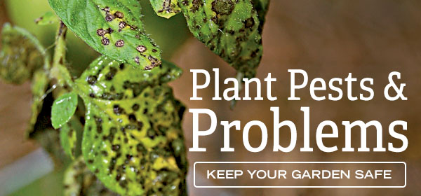 Plant, Pests & Problems - Keep Your Garden Safe