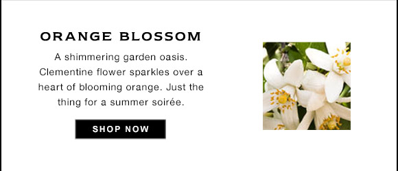 ORANGE BLOSSOM A shimmering garden oasis. Clementine flower sparkles over a heart of blooming orange. Just the thing for a summer soire. SHOP NOW