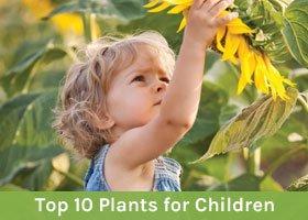 Top 10 Plants for Children