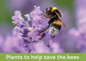 Plants to help save the bees