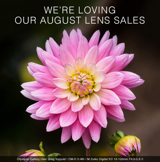 WE'RE LOVING OUR AUGUST LENS SALES