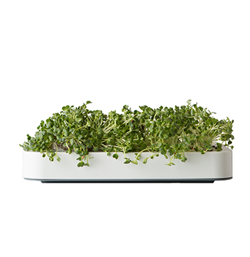 Chef'n Microgreens Gardens $40