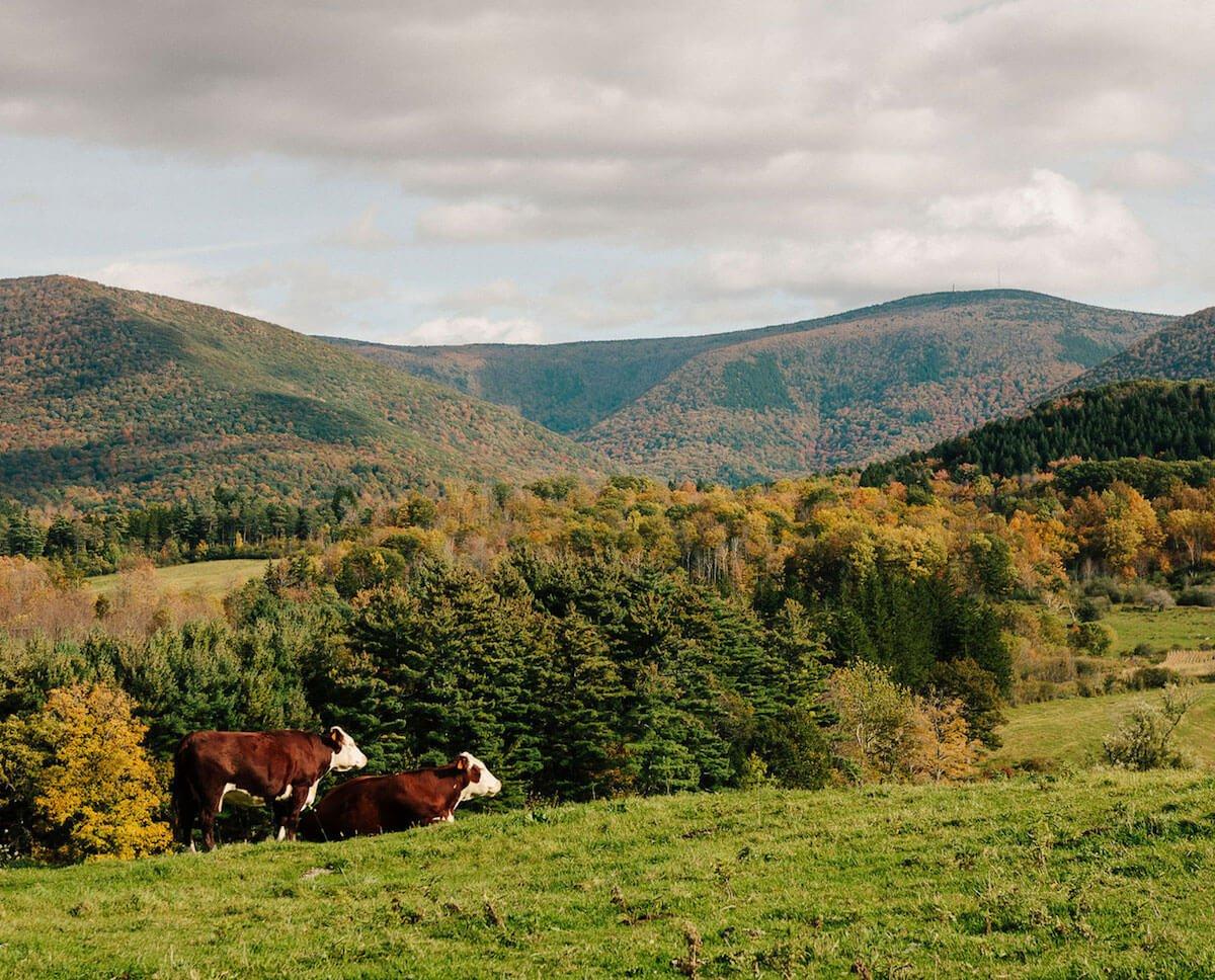 Leaf-Peeping Season in the Berkshires
