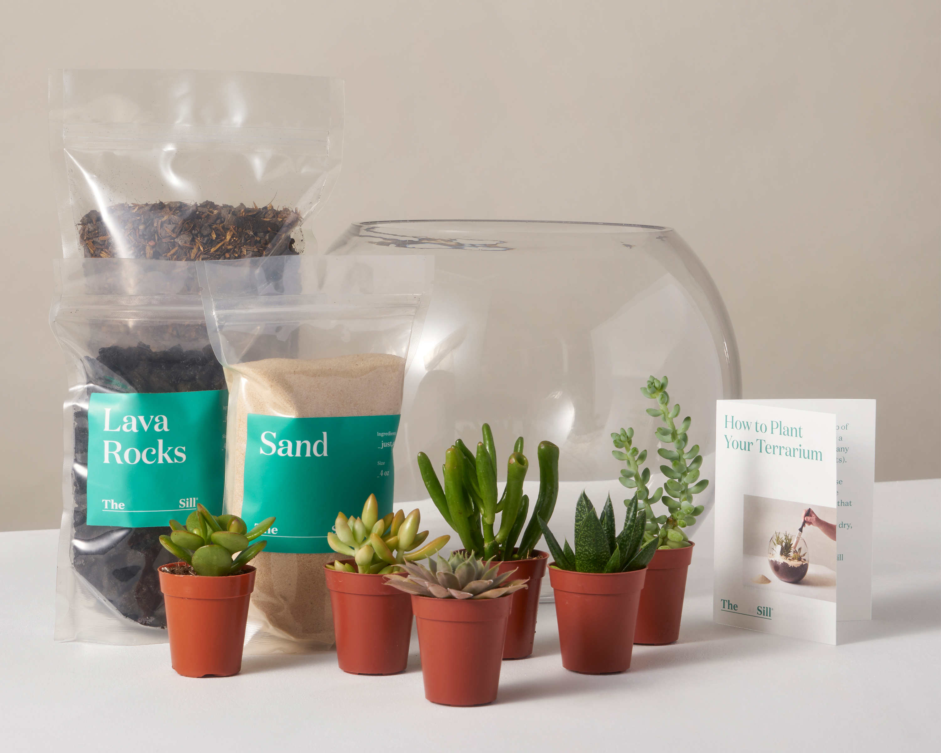 The Sill The Ultimate Diy Terrarium Kit Milled