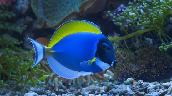 salt water fish 3 coral frags 20 powder blue tang 20 and so much