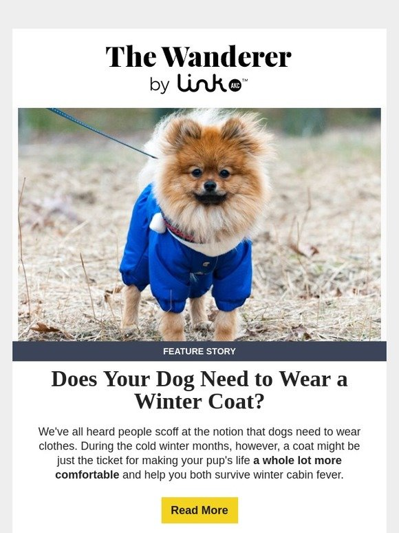 Link AKC: Does your dog need a winter coat? 🐾 | Milled