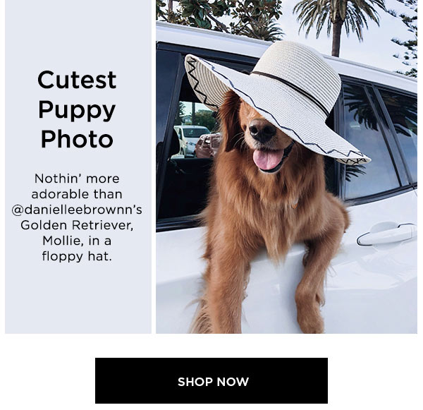 Cutest Puppy Photo   Nothin' more adorable than @danielleebrownn's Golden Retriever, Mollie, in a floppy hat.   SHOP NOW >