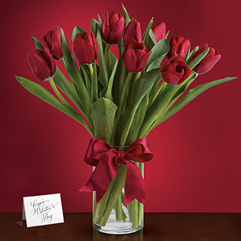 Radiantly Red Tulips