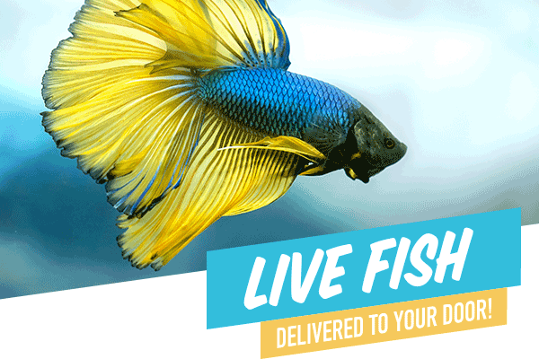 petstock com au: Live Fish delivered to your door! | Milled