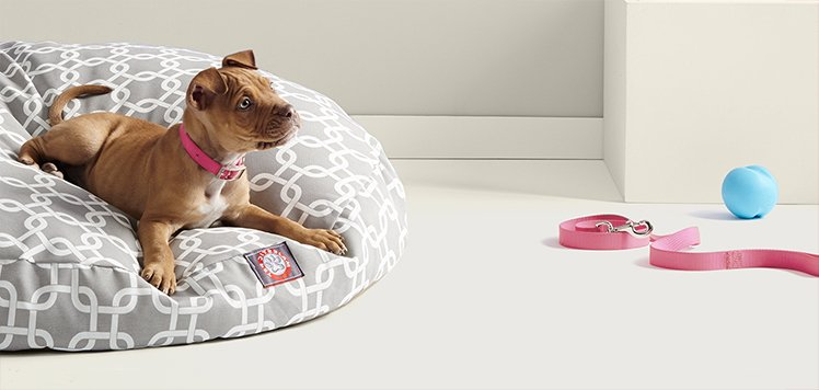 Pampered Pet Accessories With Real Simple