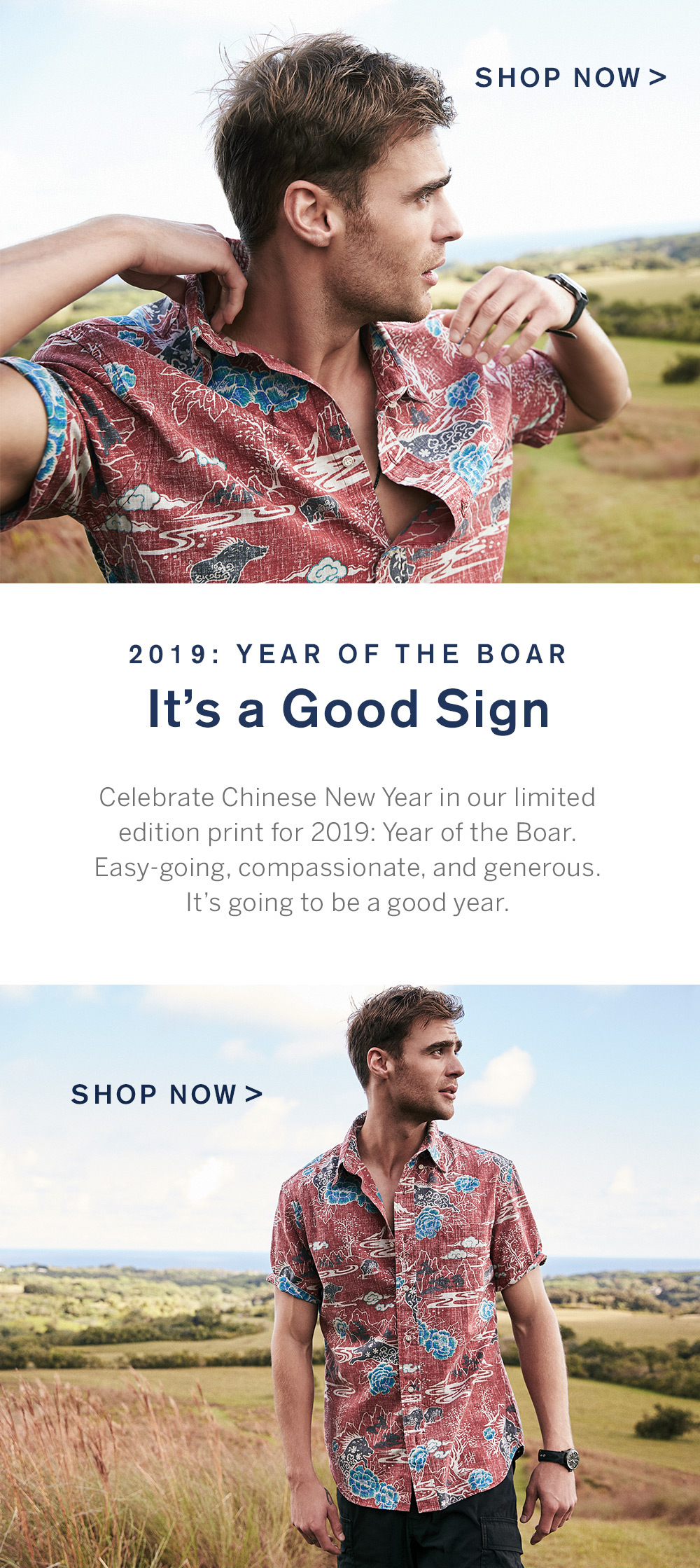 Shop Year of the Boar