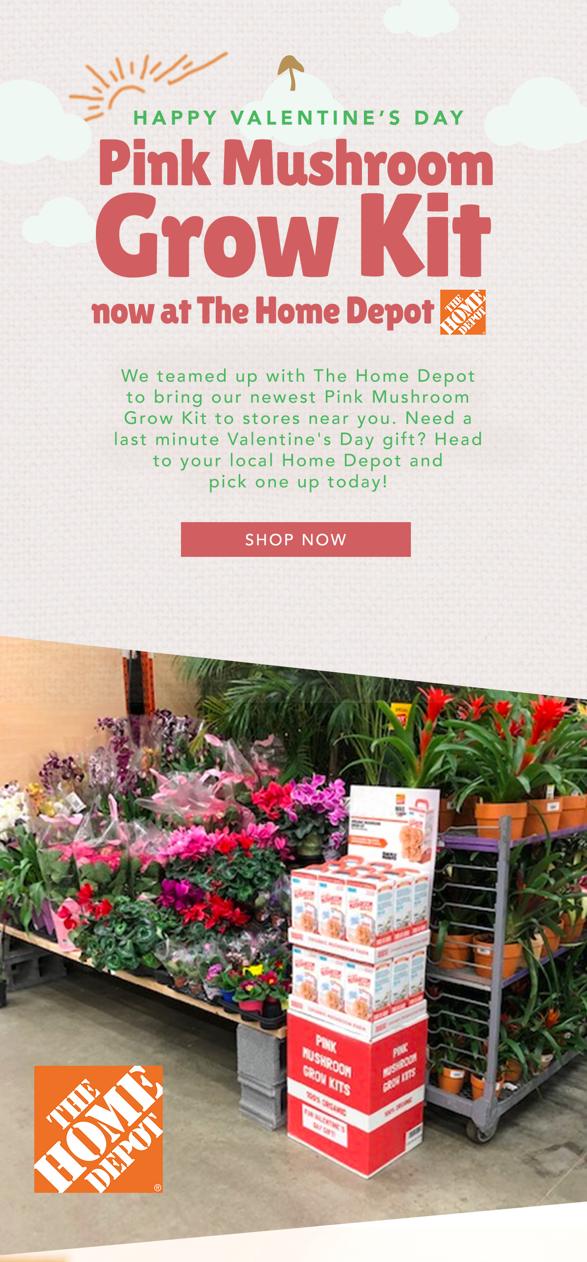 Water Garden: Now at The Home Depot: Pink Mushroom Grow Kit