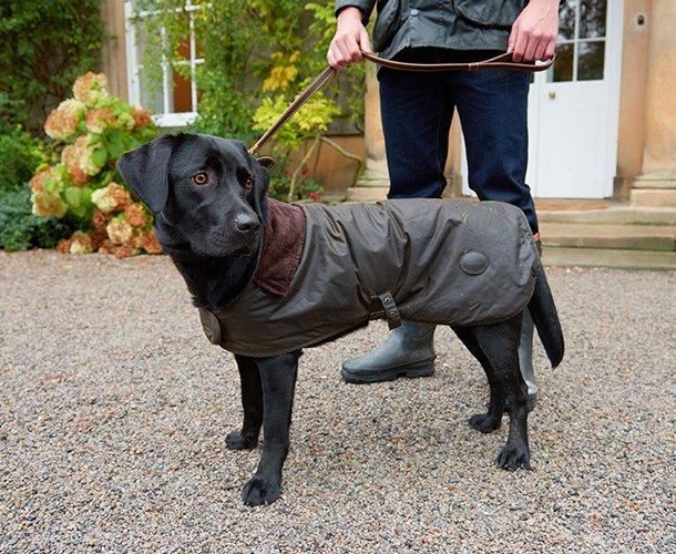 barbour dog coat navy