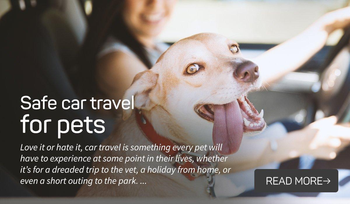 Safe car travel for pets
