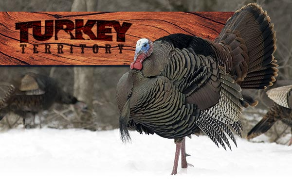 TURKEY TERRITORY - GROUND ZERO FOR EVERYTHING TURKEY HUNTING