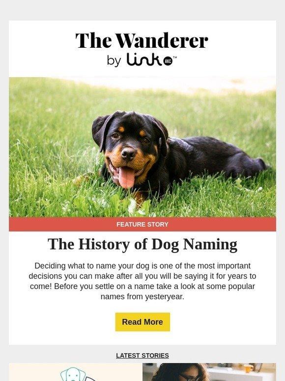 Link AKC: A Poodle Named Noodle? The History of Dog Naming | Milled