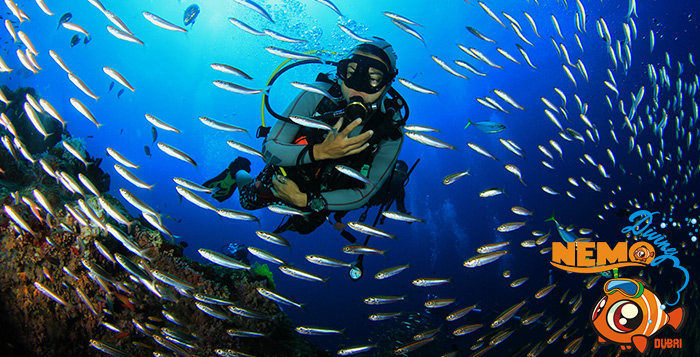 Scuba Diving at Jumeirah Beach | Best Places to Scuba Dive in Dubai | The Vacation Builder