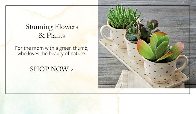 Stunning Flowers & Plants - For the mom with a green thumb, who loves the beauty of nature.