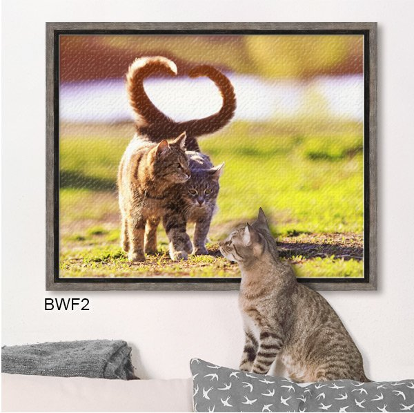 Cute photo of two cats printed on canvas and framed in gray Barnwood Canvas Floater BWF2.