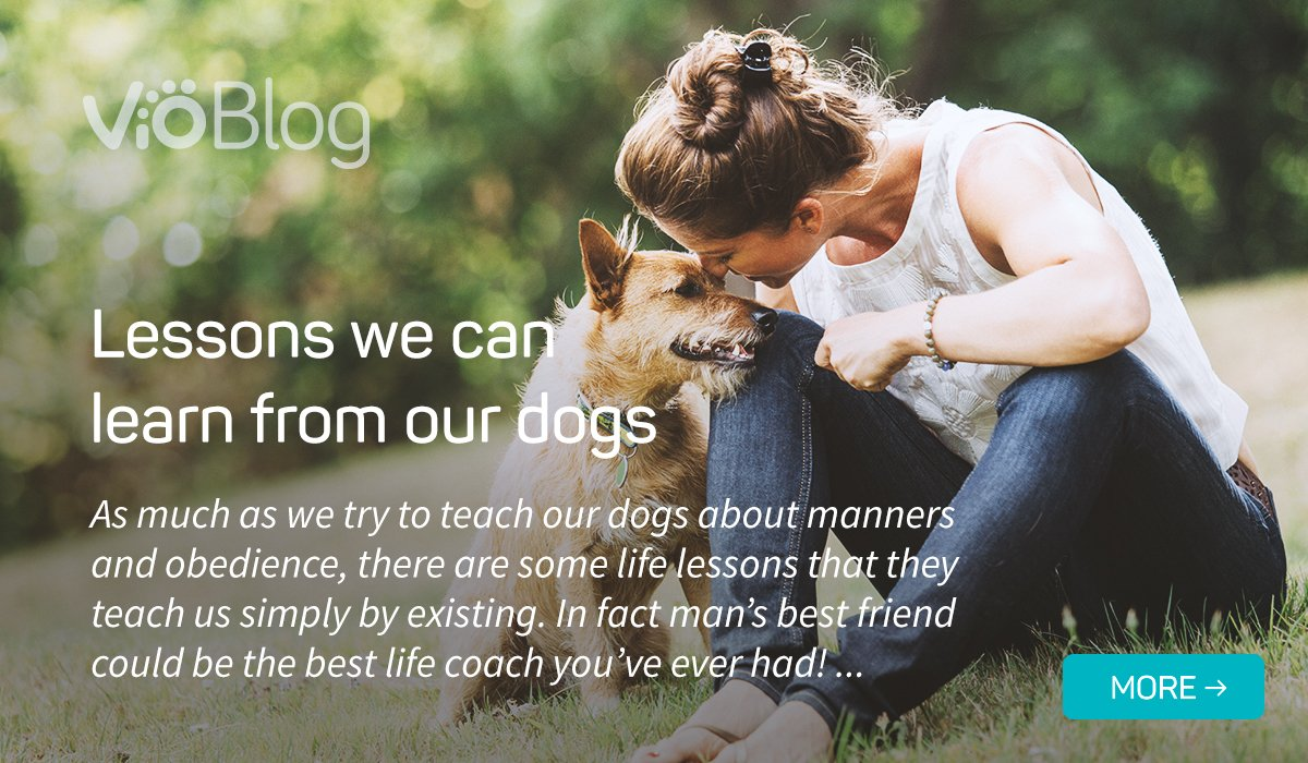 Lessons we can learn from our Dogs