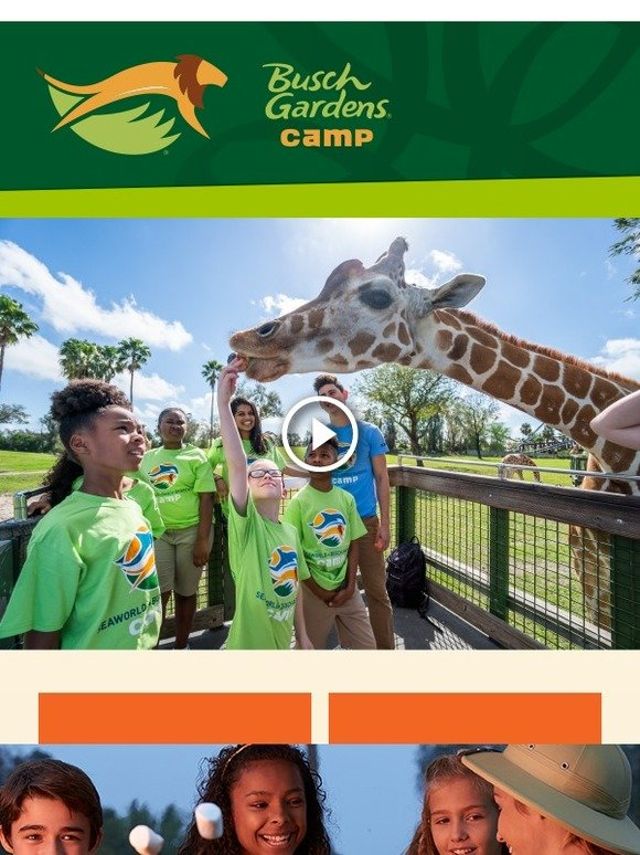 Seaworld Parks Book Our Wildest Summer Camps Today Milled