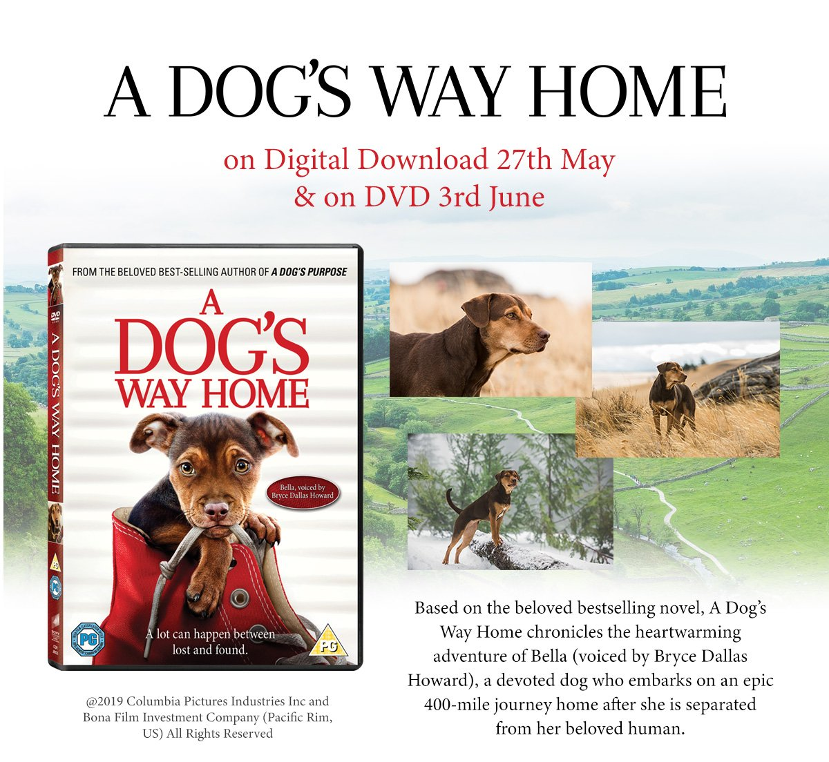 A dog's Way Home - Out on DVD June 3rd