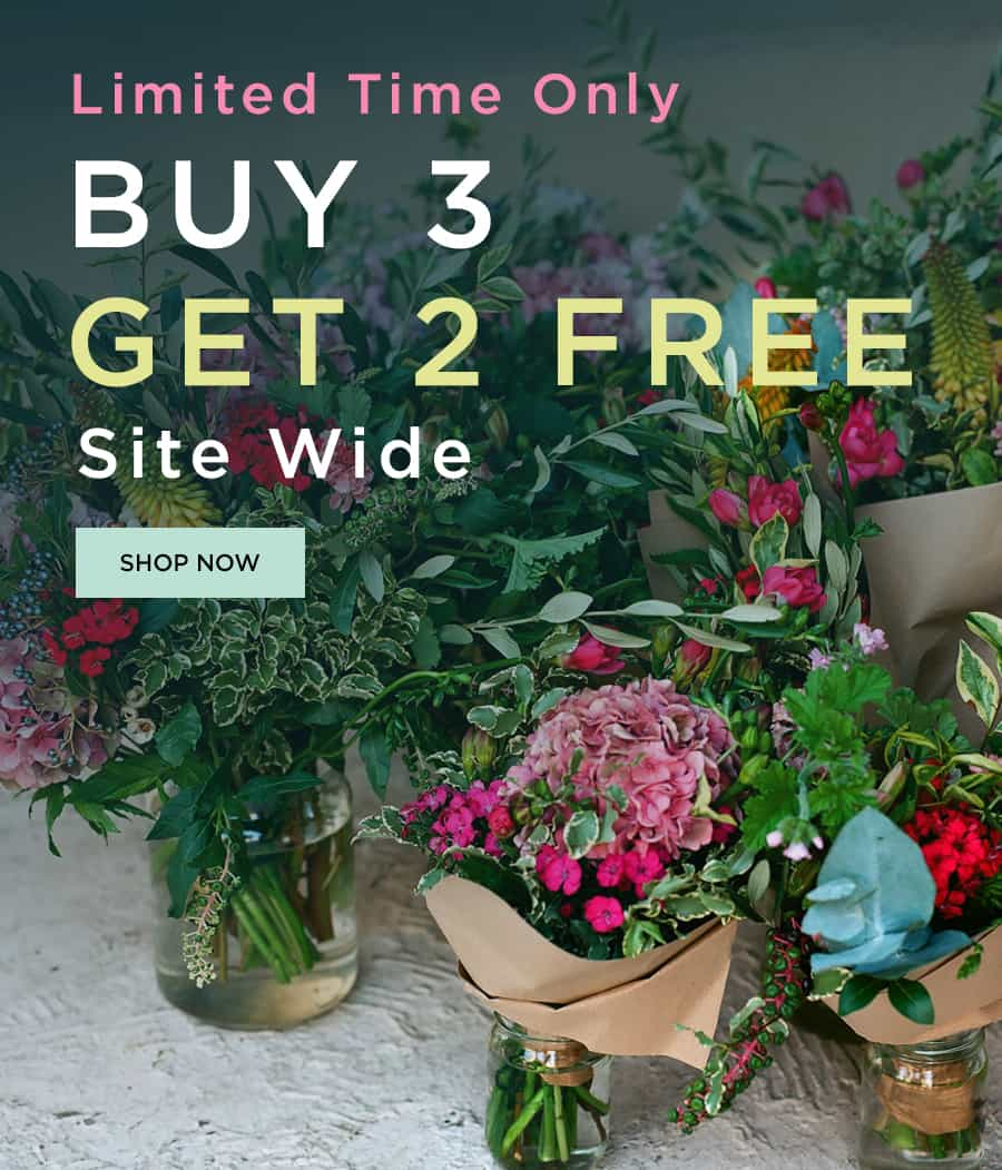 Buy 3 Get 2 Free Site Wide