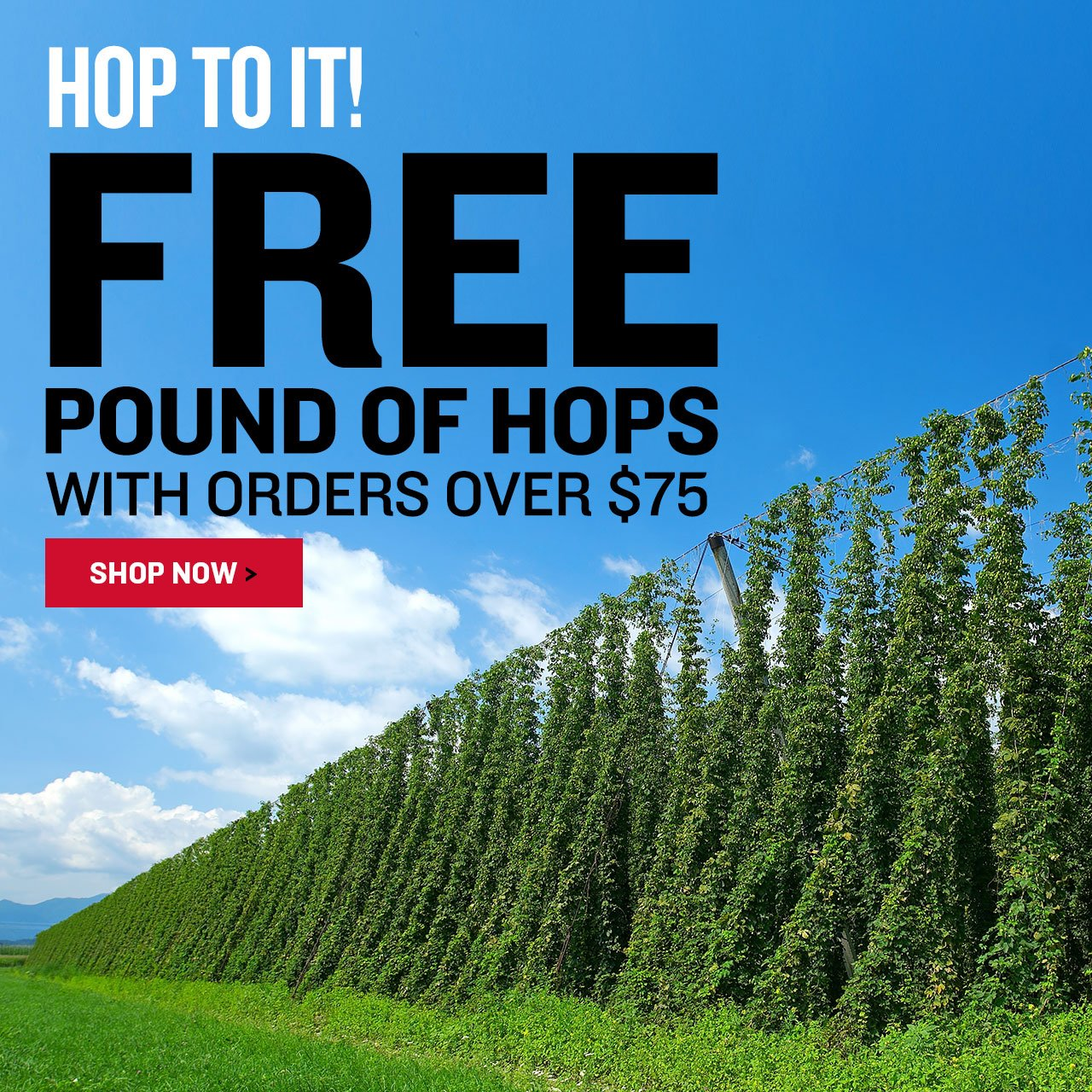 Free 1 lb of hops with orders over $75. Promo code: HP-75-HOPS-100