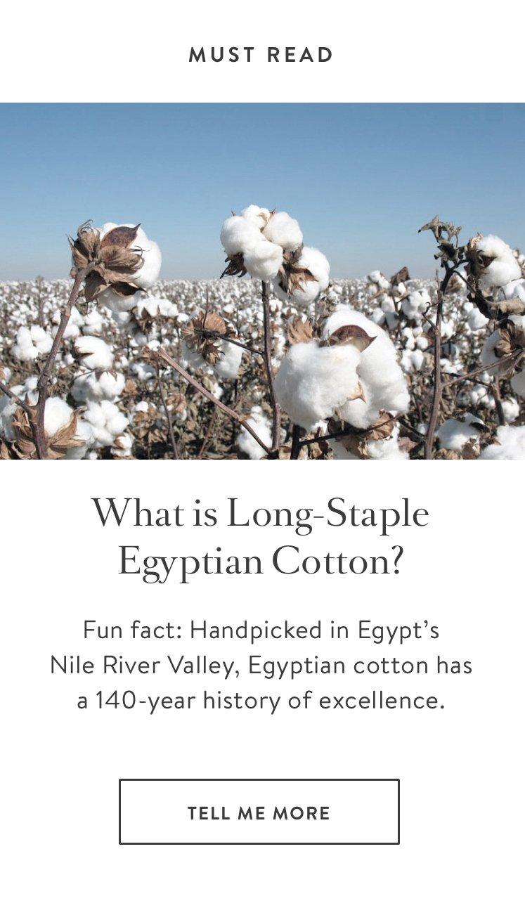 Egyptian Cotton Blog Story