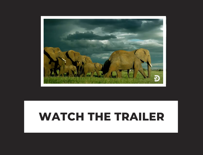 WATCH THE TRAILER