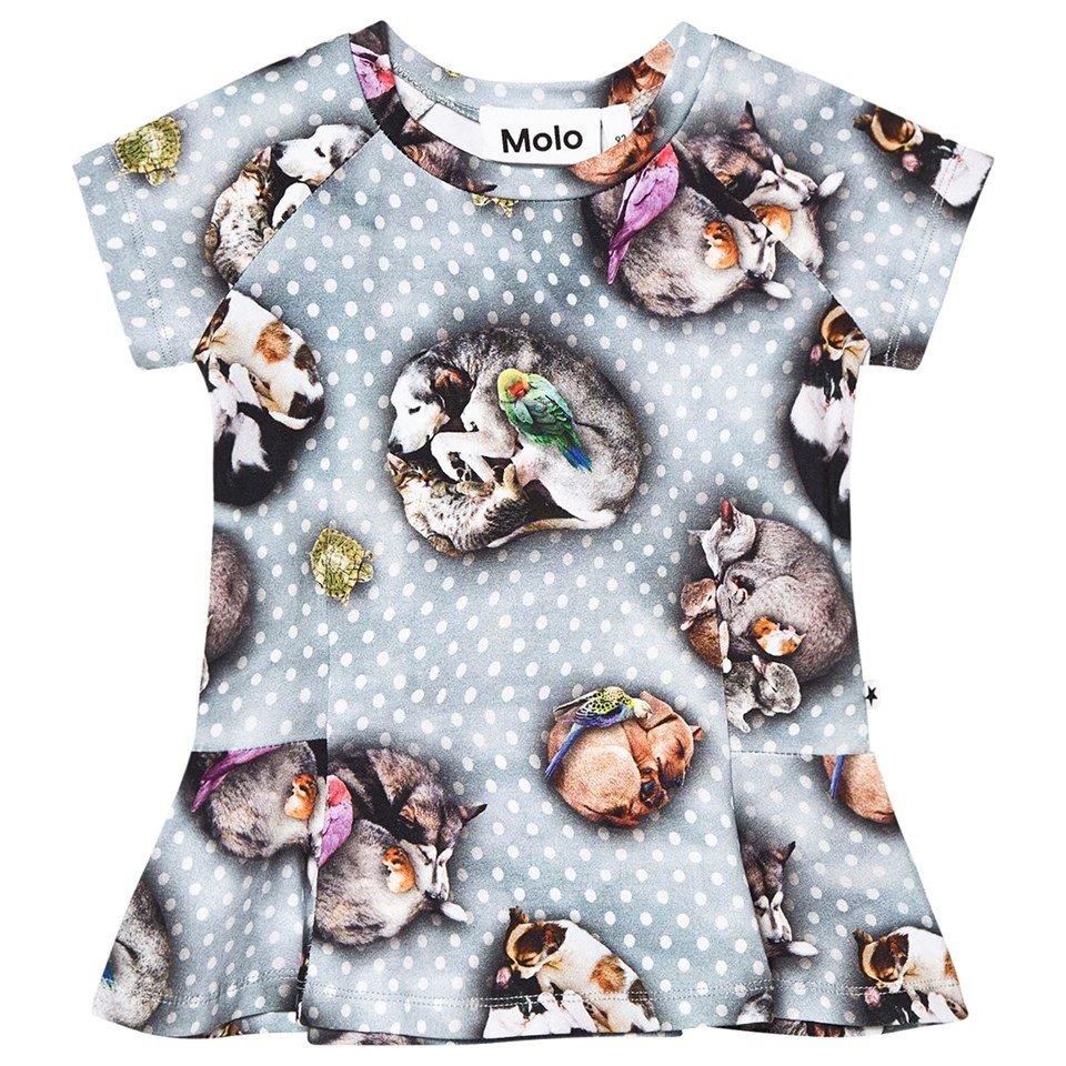 Molo Blue Pets 'n Dots Robbin T-Shirt
