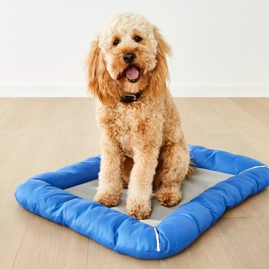 Kmart Australia Cool Pet Accessories This Summer Milled