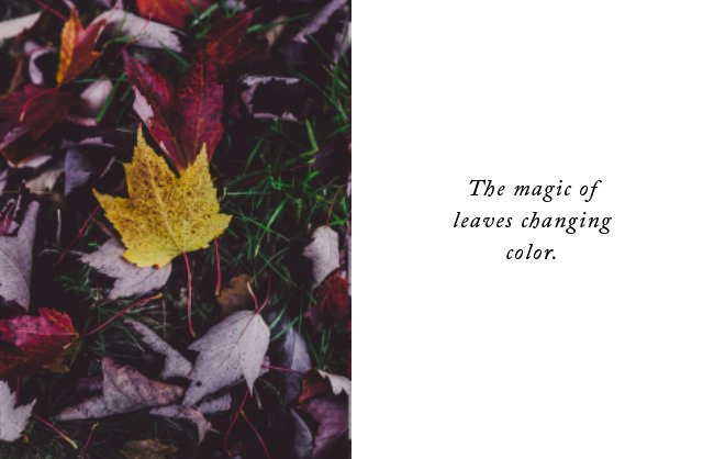 The magic of leaves changing color.