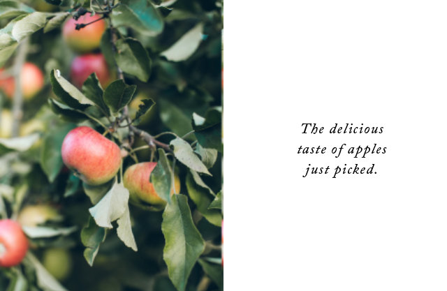 The delicious taste of apples just picked.