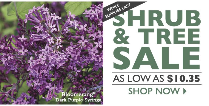 Shrub and Tree Sale - As Low As $10.35!