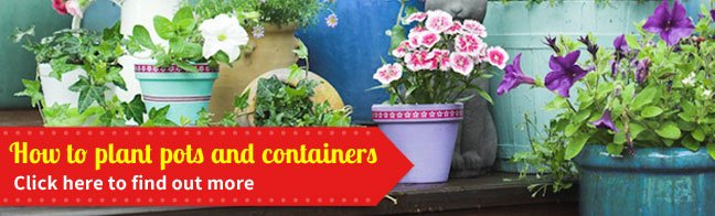 How to Plant Pots and Containers