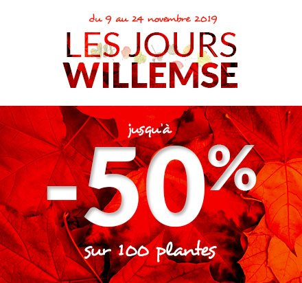 Les Jours Willemse