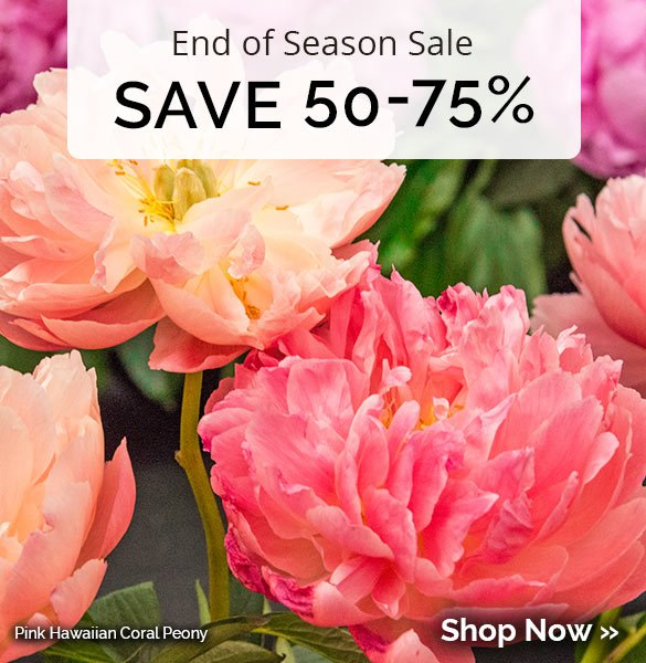 Save 50-75% on almost all our fall items