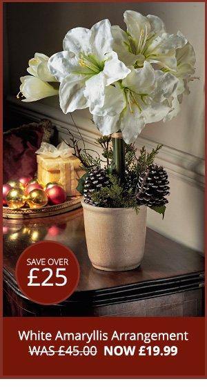 White Amaryllis Arrangement WAS £45.00  NOW £19.99