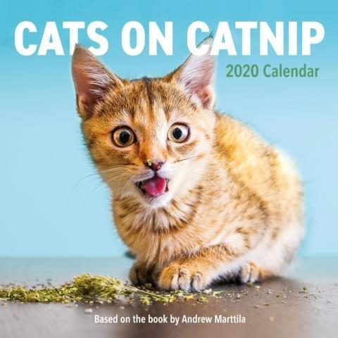 Cats on Catnip Wall Calendar