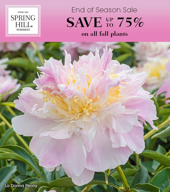 Save up to 75% on all Fall Plants