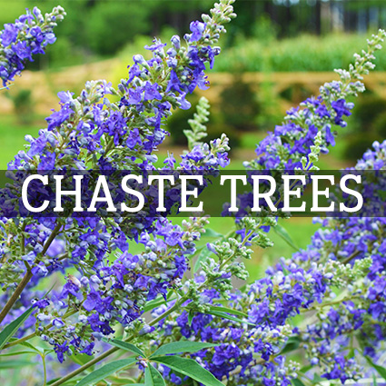 Chaste Trees