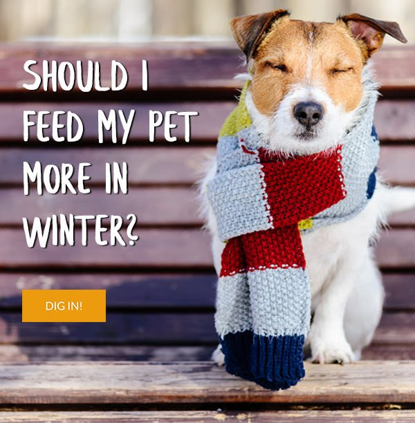 Should I feed my pet more in winter?