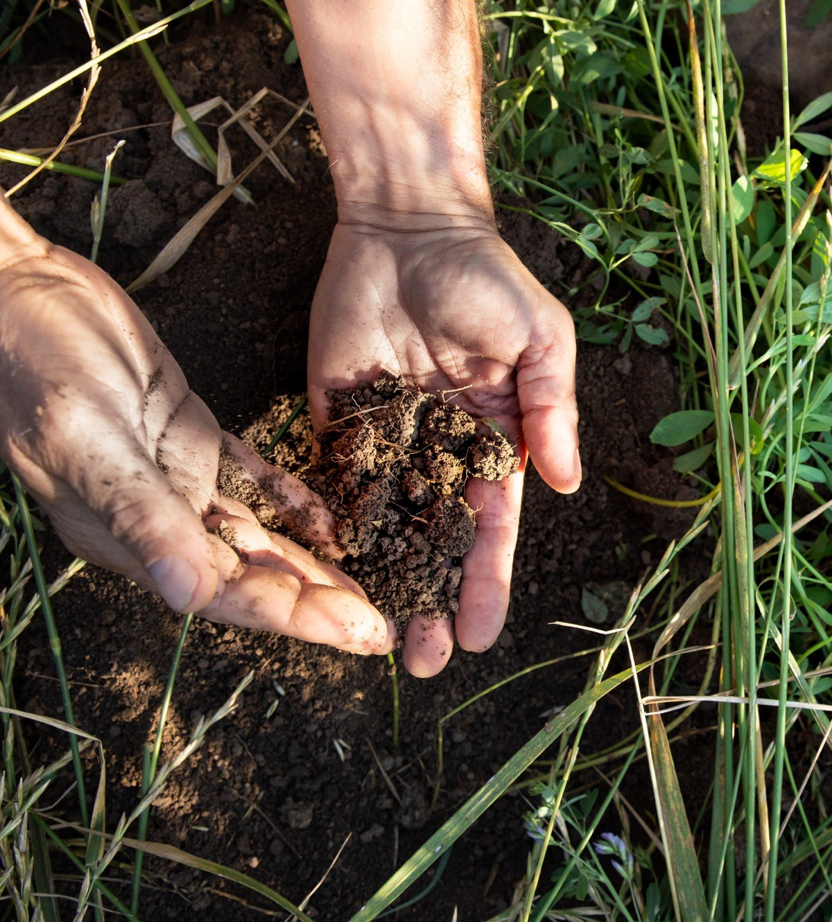 what is regenerative organic agriculture Image