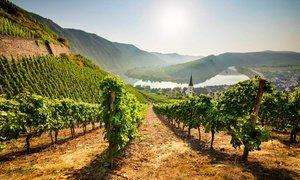 Mosel: 2-5 Nächte mit Halbpension und Weinprobe