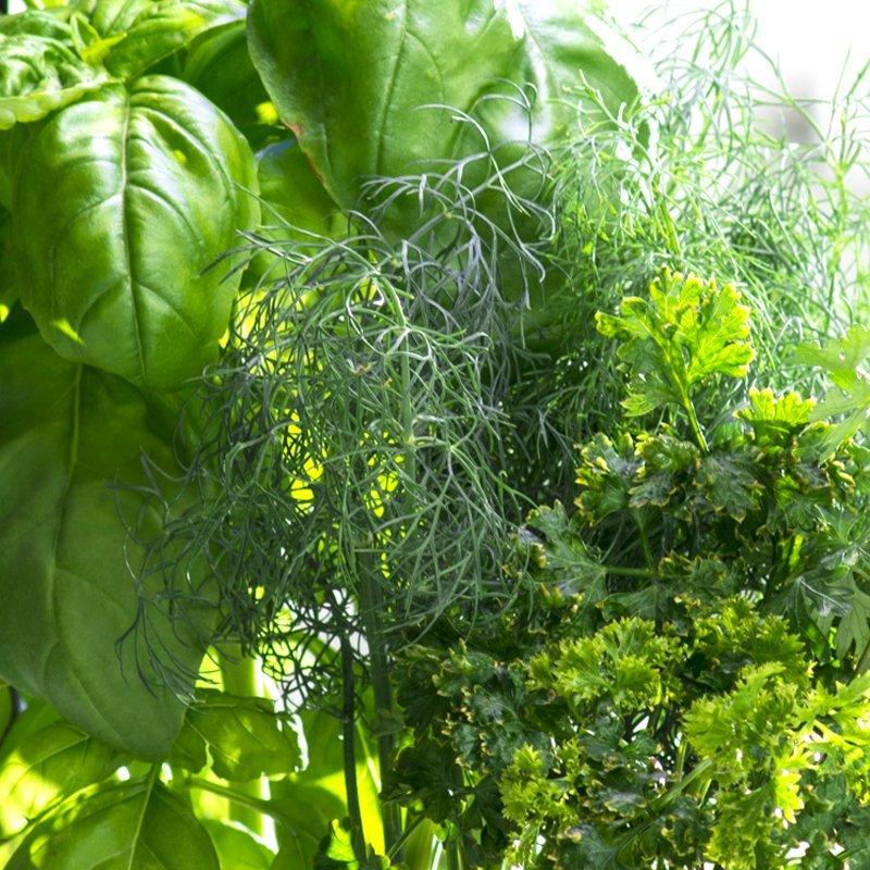 Gourmet Herbs Seed Pod Kit (3-Pod)