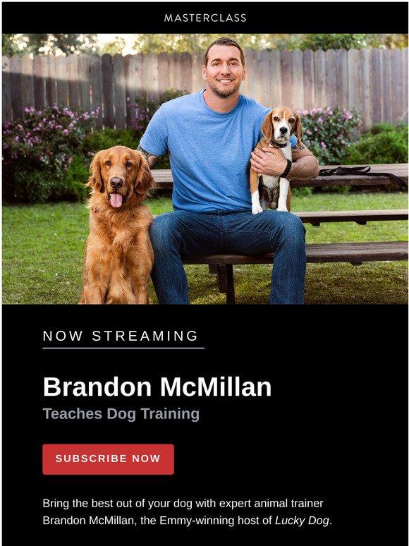 Dog Training Masterclass